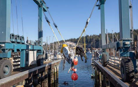 The whale used for dissection is lifted from the ocean.  Photo Courtesy of Daniel Wright
