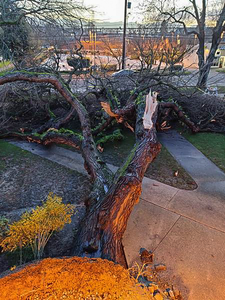 The view of the fallen tree from Chuck Strawn's office.